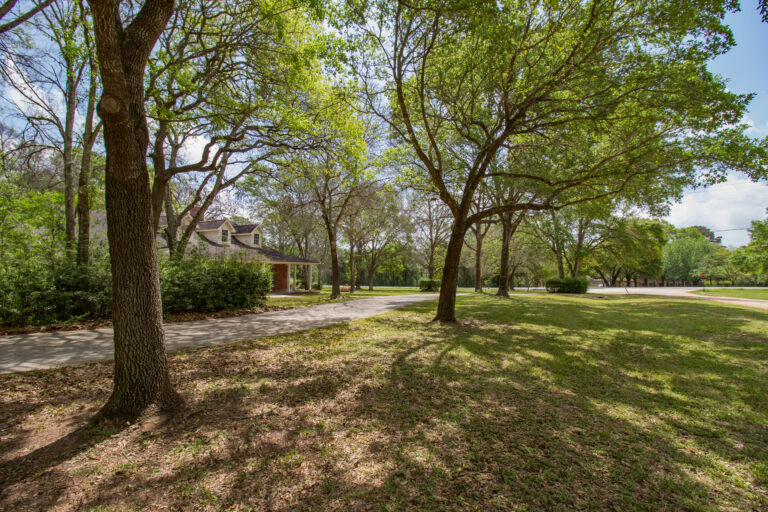 Front yard with trees, shade, and driveway