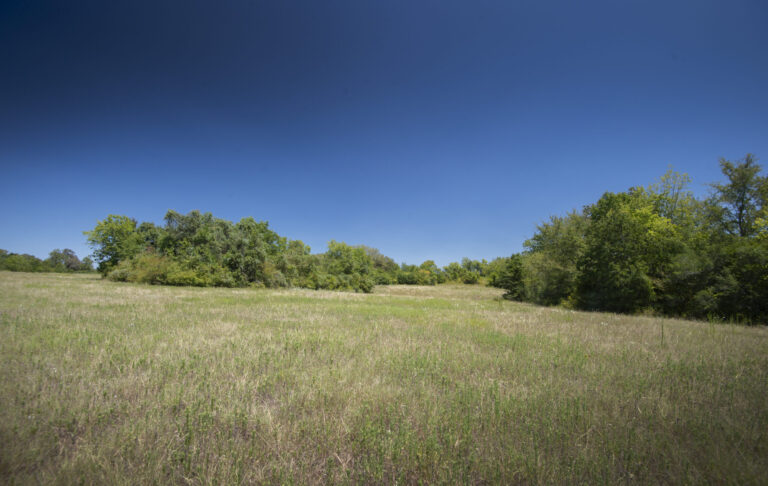 16-004-trees-meadow