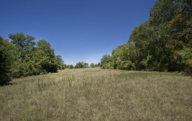 16-004-trees-meadow2