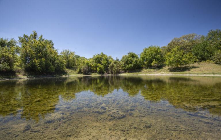 16-004-trees-pond