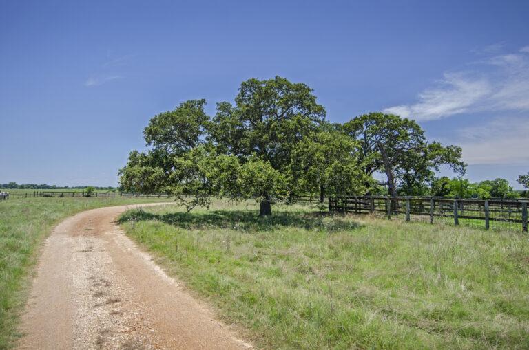 4210-DRIVE&TREE