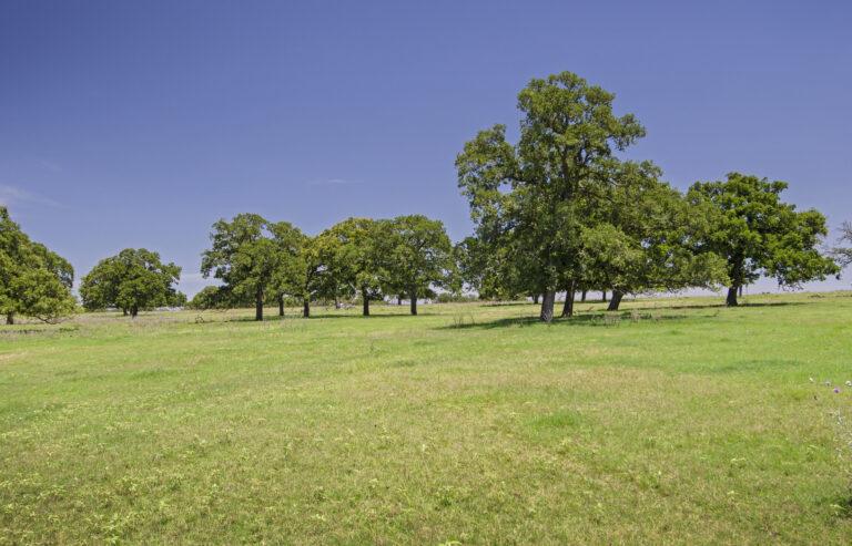 4210-TREES1