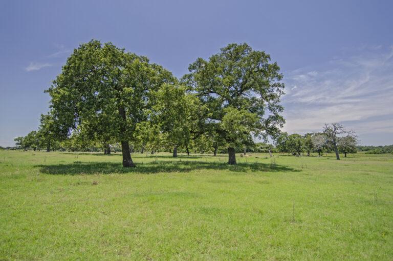 4210-TREES2