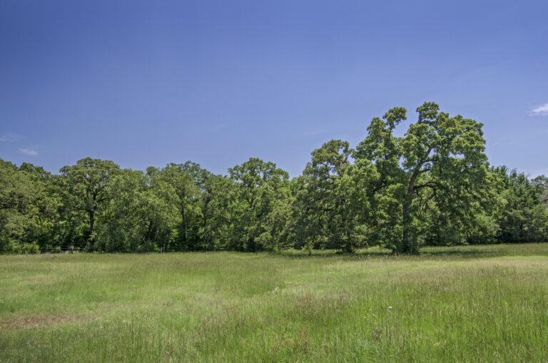 4210-TREES3