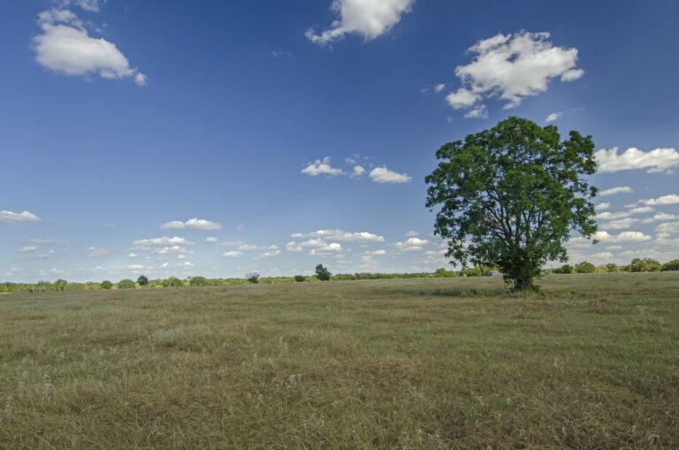 4219-TREE VIEW