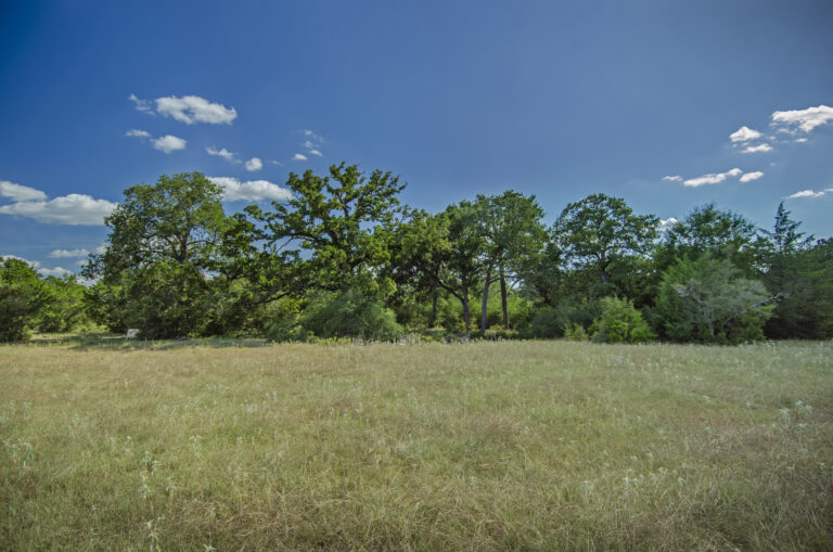 4219-TREES1