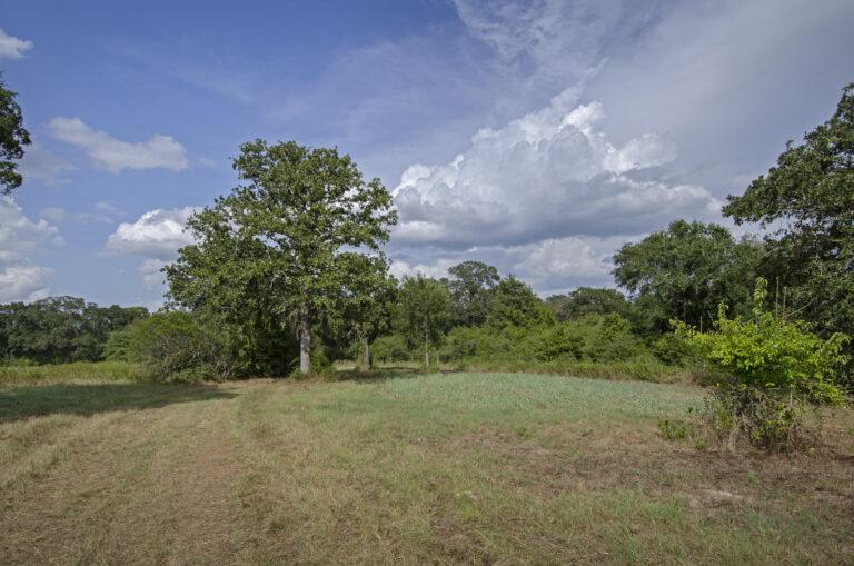4221-TREES2
