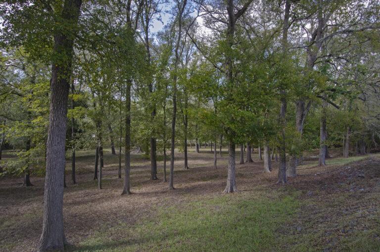 4223-TREES1