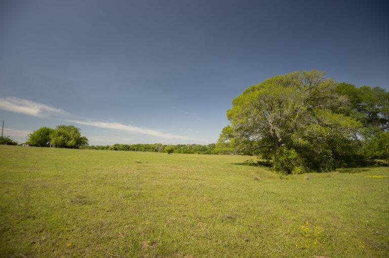 5314-trees-pasturess