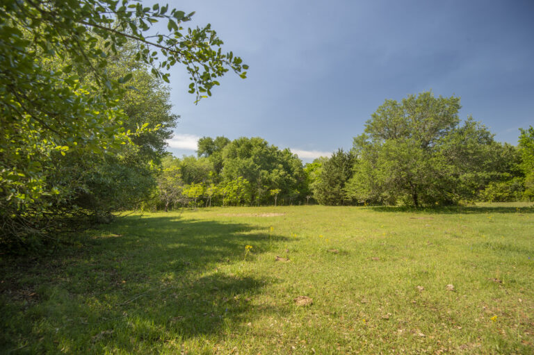 5314-wooded-area