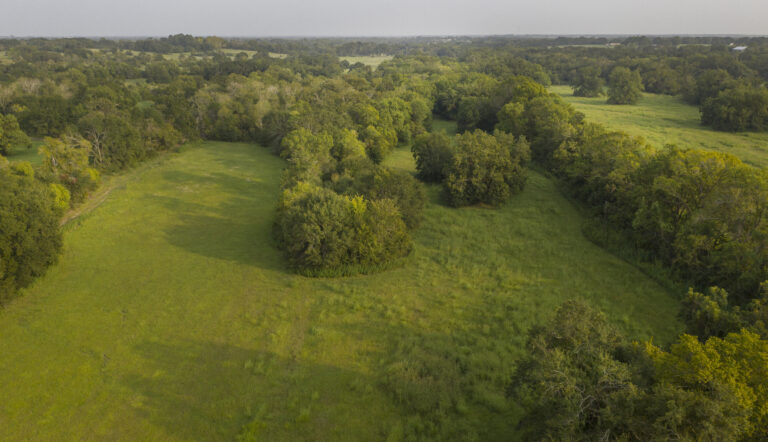 5367b-b-meadow-trees