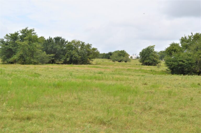 Grassy Field and Trees